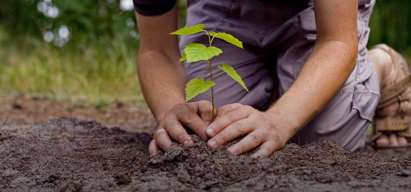 India Emporium pledges to plant a tree